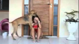 Download Video Touching Video of a Rescued Dog Shows his Gratitude! MP3 3GP MP4