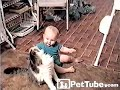 Cat Wants Baby's Balloon