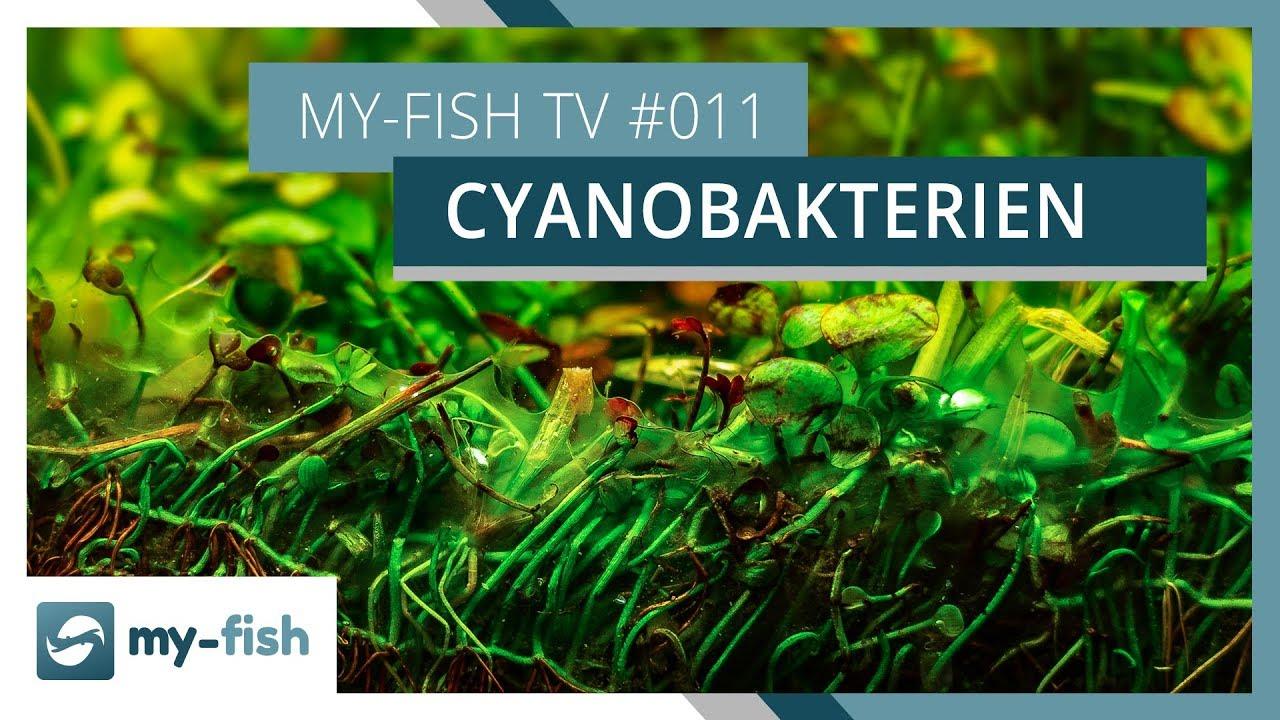 my-fish TV - Deine Nr. 1 Anlaufstelle für alle Themen rund um die Aquaristik 53