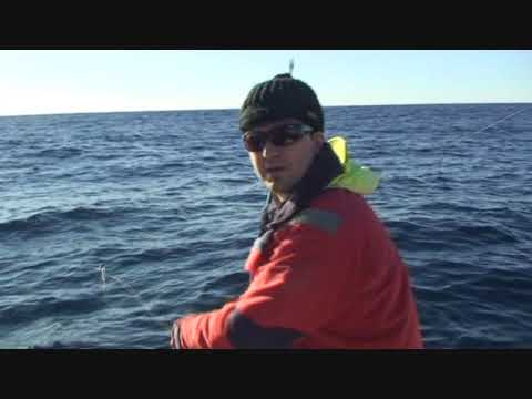 Tampa fishing charters and guides outdoor adventures for for Tampa deep sea fishing