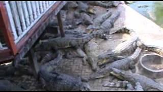 Samut Prakan Thailand  city photos gallery : Samut Prakan Crocodile farm and Zoo, Samut Prakan, Thailand