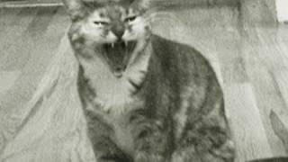 Kitty Criminal (Singing Cat Music Video)