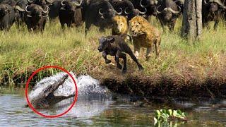 10 Animals Saving Other Animals! by Epic Wildlife