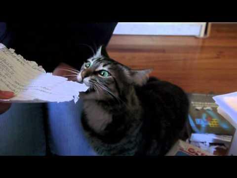 最天然環保碎紙機:貓咪碎紙機