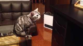 【猫動画】完全にコント!おやつの引出しを開けようとする猫にまさかのオチが…(笑)