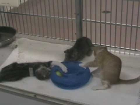spca - Sad but still hopeful video from the animal shelter at Houston SPCA. They're doing a great job with the animals and you too should think about adopting an an...