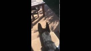 Fetching Jack
