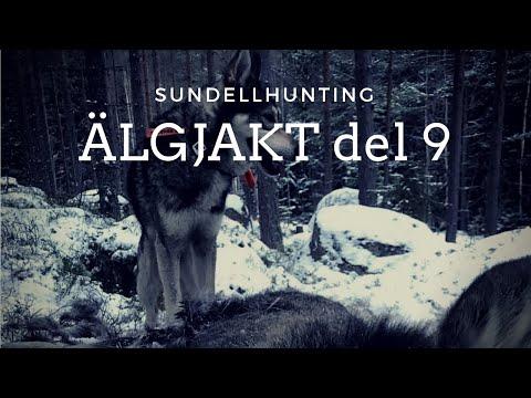 Video ÄLGJAKT DEL 9 (2017) sundellhunting download in MP3, 3GP, MP4, WEBM, AVI, FLV January 2017