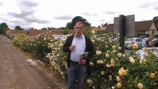 #130 Erziehung und Schnitt Englischer Rosen als Hecke