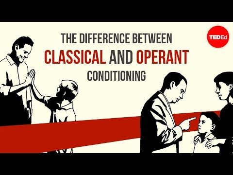 conditioning - View full lesson: http://ed.ted.com/lessons/the-difference-between-classical-and-operant-conditioning-peggy-andover Why is it that humans react to stimuli wi...