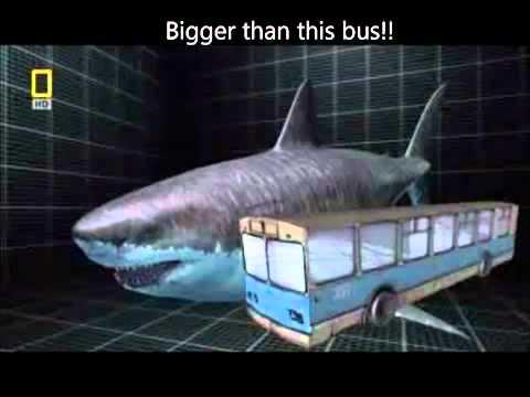 Dünyanın en büyük köpek balığı