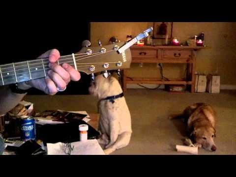 Ein Hund das zu Blues voll abgeht!