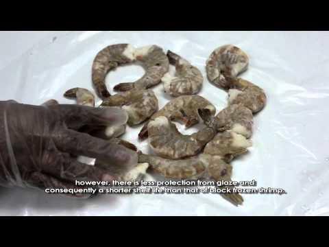Shrimp Awareness Documentary
