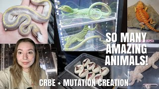 Canada's Largest Reptile Expo + Tons Of Cool Ball Pythons! (CRBE + Mutation Creation Facility!) by Emma Lynne Sampson