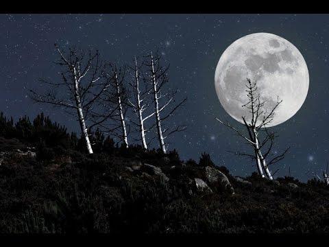 8 Hour Deep Sleep Meditation: Sleep Music, Meditation Music, Relaxing Music, Music for Sleep ☯198