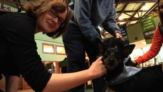 Therapy Dogs Return To Clarkson University For Mid-terms