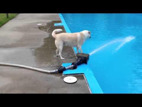Un perro no muy listo