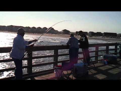 Catching spring Sea Mullets off Seaview Fishing Pier