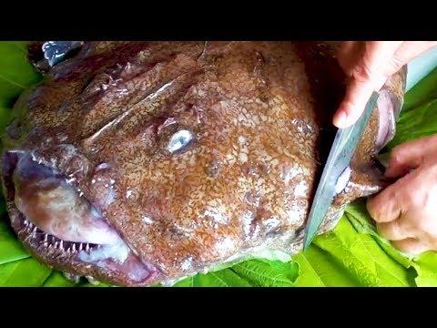 Japanese Street Food - Massive MONKFISH Seafood Japan - Thời lượng: 15 phút.
