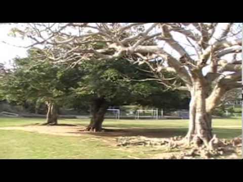 沖縄    石垣島 「白保小学校」