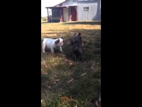Lexie and leroy playin outside