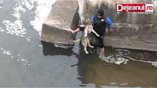Szczęście i wdzięczność psa po uratowaniu