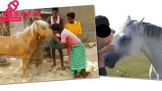 Download Video ঘোড়াকে দেখতে গিয়ে ধর্ষণ করলেন সিরাজগঞ্জেের পল্লী পশু চিকিৎসক !! এ নিয়ে ব্যাপক তোলপাড় MP3 3GP MP4
