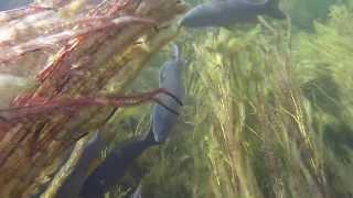 Подводная охота 3ч  2013г