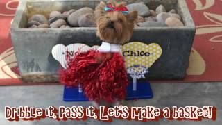 FUNNY VIDEO OF 2 SMARTEST YORKIE PUPPY PLAYING BASKETBALL GAME WITH DOG CHEERLEADING CHLOE POLKA DOT - YouTube