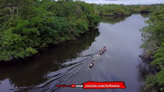 Video PENGUASA AMAZON! 10 Sosok Hewan Penghuni Hutan Sungai Amazon MP3, 3GP, MP4, WEBM, AVI, FLV Juni 2019