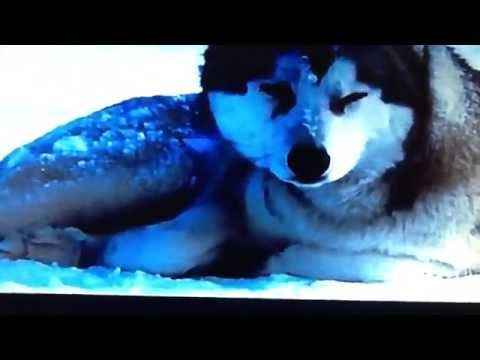 DJ The Dog Star Of Snow Dogs & Eight Below Tribute