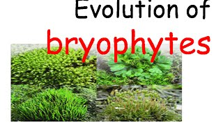 Evolution of bryophytes.mp4