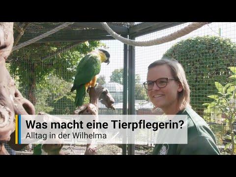 Stuttgart: Tierpflegerin in der Wilhelma - Zootierpfl ...