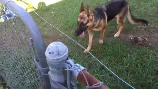 Video DIY Electric fence install and setup for a German Shepherd MP3, 3GP, MP4, WEBM, AVI, FLV Mei 2017
