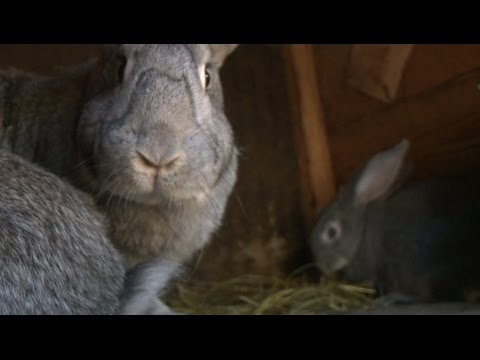 Кроликов смотреть онлайн видео в отличном качестве и без регистрации на