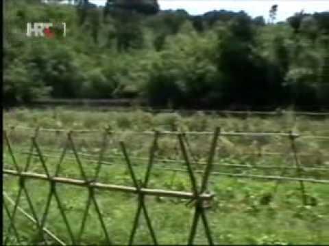 Permakultura u praksi - druga priča (Japan)