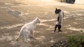 فيديو قطط - فيديو قطط مضحكة - قطط فيديو