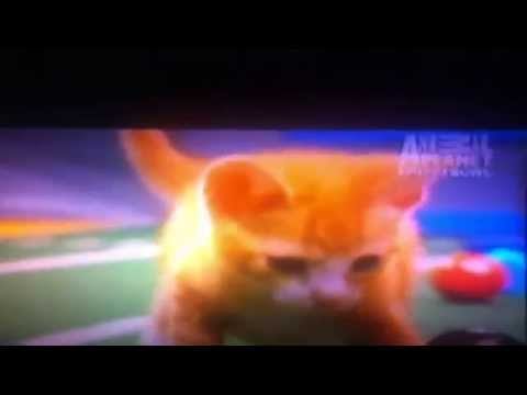 Puppy Bowl 10 Kitty Halftime Show (Featuring Keyboard Cat)