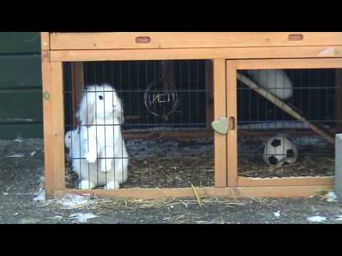 dotje nestje jonge konijnen 3.5 weken.mpg