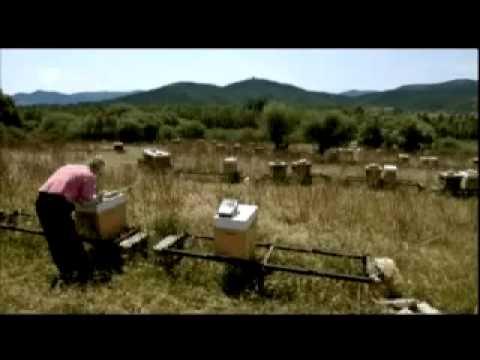 Sardiniens tödliches Geheimnis - Uranmunition und ander ...