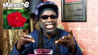 Medical Monday'Hibiscus aka Sorrel/Roselle/Rosella/Bissap/Sobolo/Jamaica/Wonjo/Zobo' with subtitlesFollow Macka B:https://www.facebook.com/OfficialMackaBhttps://www.instagram.com/officialmackabhttps://twitter.com/mackab http://www.mackab.comCucumba & Wha Me Eat T-Shirts and more Available at www.mackab.comLyrics:A Medical Monday we a go discussAn amazing plant called HibiscusRefreshing drink you have to boil it firstHmmm it's deliciousWhen I drink hibiscus I am happy like PharrellInna Jamaica they call it SorrelSome people call it RoselleAustralia it's known as Rosella as wellSenegal it's Bissap, Ghana SoboloSimply known as Jamaica in MexicoIn the US also,Gambia WonjoInna Nigeria they call it ZoboAnyhowUsed around the world traditionallyHot or cold as a  drink or medicallyDiuretic, anti-inflammatoryGood source of vitamins blood pressure check the study Antioxidants protectionIf you add a sweetener use a healthy oneSome add ginger some add rumMe nu drink alcohol so me nu add noneOne caution about hibiscus teaThey say don't have it in pregnancyDisclaimer don't just take it from meCheck your healthcare provider for your remedyDisclaimer:The information contained in these topics is not intended nor implied to be a substitute for professional medical advice, it is provided for educational purposes only.Always seek the advice of your physician or other qualified healthcare provider before starting any new treatment or discontinuing an existing treatment.
