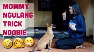 Video NOOBIE MAU DENGERIN NGGAK?? MP3, 3GP, MP4, WEBM, AVI, FLV Februari 2019
