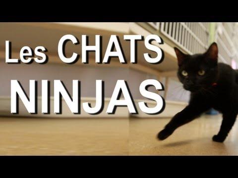 I Love Cats : Je Joue avec mon Chat PC