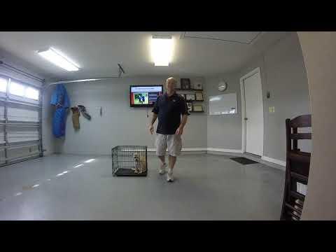 Protection Dog Training Orlando Fl