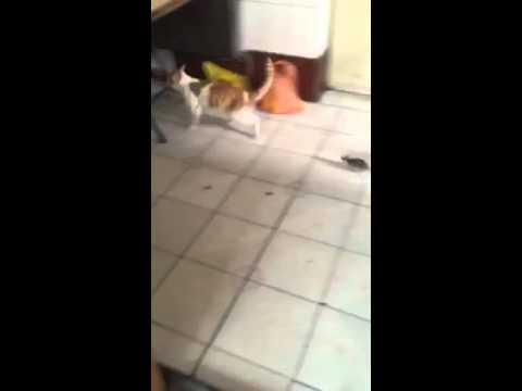 貓抓老鼠不稀奇,老鼠抓貓才夠猛!