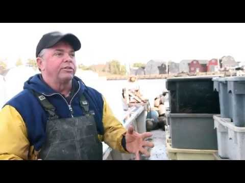 PEI Mussels: A Sustainable Story 02 – Farming and Harvesting