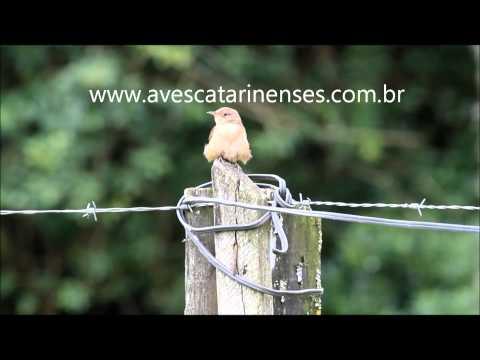 Curreca - Cristiano Voitina
