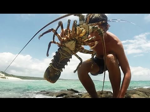 Spearfishing a CRAYFISH!! - Catch n Cook