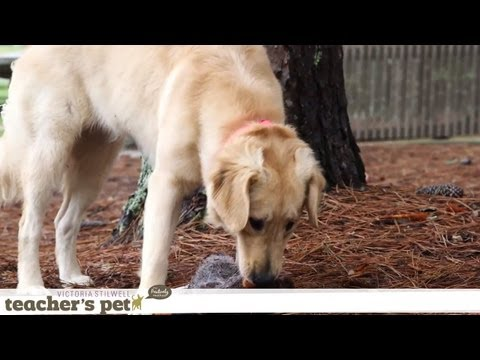 eHowPets - Watch more dog training tips with Victoria Stilwell: http://www.youtube.com/playlist?list=PL0C724F6F6A597540&feature=view_all Today, I'm going to show you ho...