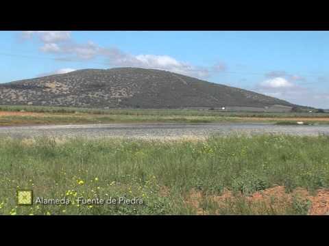 Gran Senda de Málaga. Etapa 17: Alameda-Fuente de Piedra